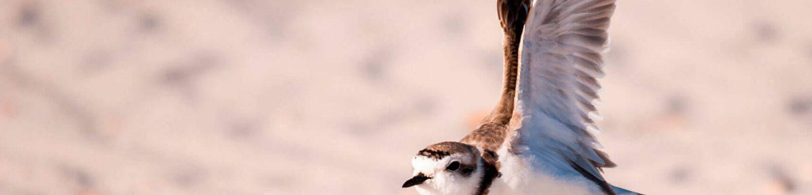 corriol-camanegre-ales-obertes